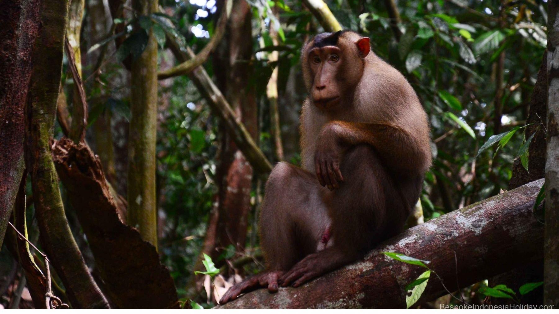 sumatera-bukit-lawang-wildlife-2